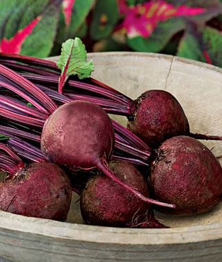 Beets Grow Well In the Northeast