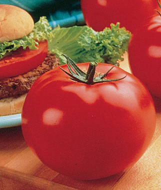 The 10 Best Tomatoes For Slicing Veggie Gardener