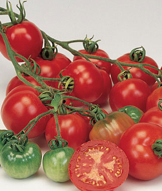 Bloody Butcher Cherry Tomato