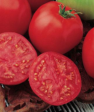 Bucks County Hybrid Tomato