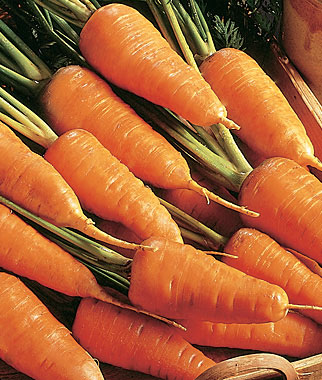 Carrots Are Relatively Easy to Grow In Northeast Vegetable Gardens