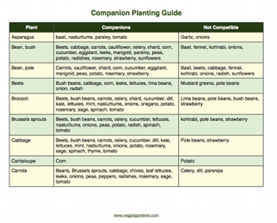 companion planting vegetables chart pdf
