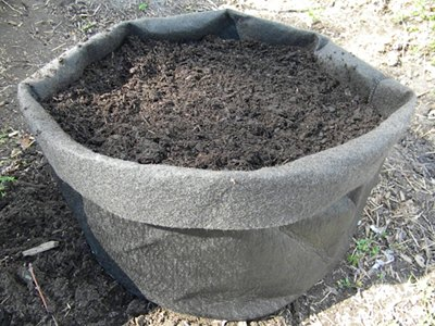 Cover the Seed Potatoes with Three Inches of Soil Mix