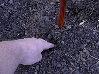 Create Holes Next To The Teepee Trellis Legs for Planting Pole Beans