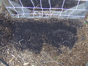 Prepare The Area For Trench Composting