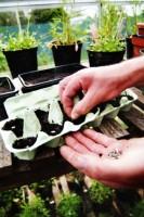 Start Seeds In Egg Cartons