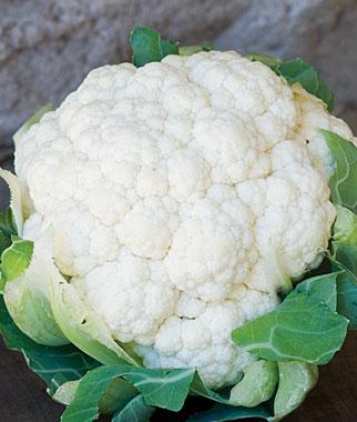 First White Cauliflower