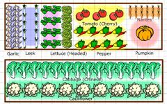 GrowVeg Online Garden Planning Tool