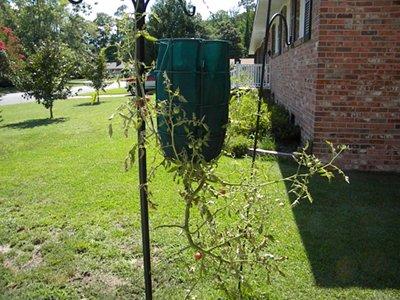 Gardeners Revolution Planter with Tomato Plant