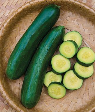 Gold Standard Cucumber