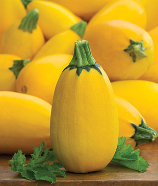 Golden Egg Squash