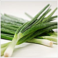 Evergreen Long White Green Onions