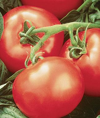 Heatwave II Tomato