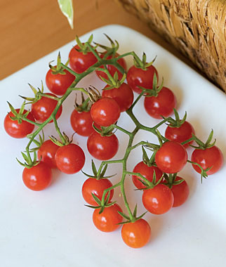 Honeybunch Cherry Tomato