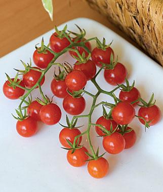 Honeybunch Cherry Tomato