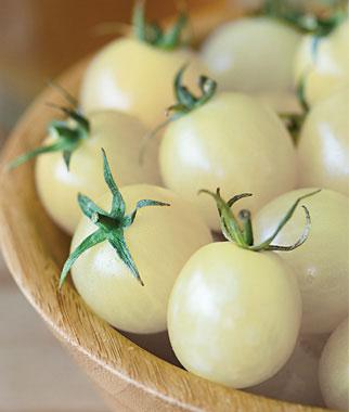 Italian Ice Cherry Tomato