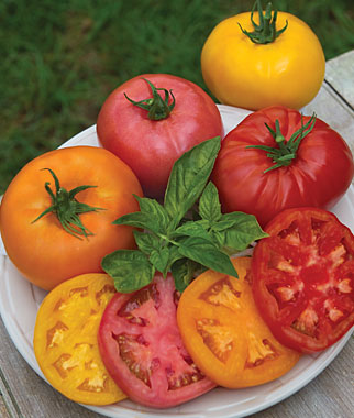 Kings of Color Tomato Collection