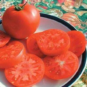 Legend Tomato