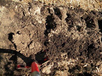 Soil mix for vegetable garden raised bed