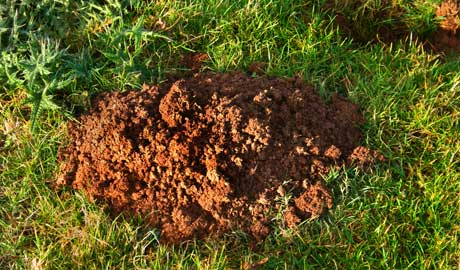mole_hill