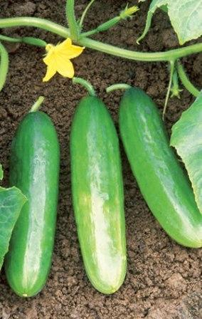 Photo: Organic Garden Info
