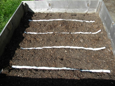 finish laying seed tapes in each trench
