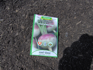 Seed Packet of Purple Top White Globe Turnips