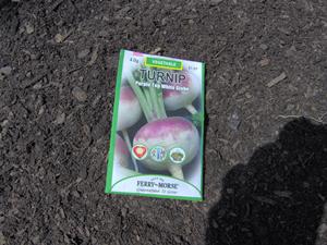 Seed Packet of Purple Top White Globe Turnips