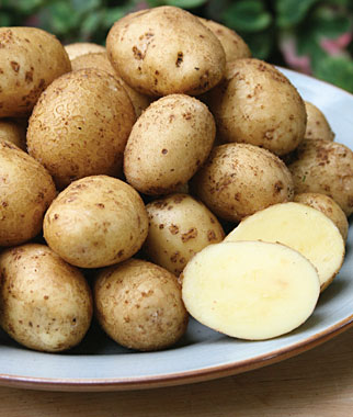 Potatoes Are an Excellent Choice for Midwest Vegetable Gardens