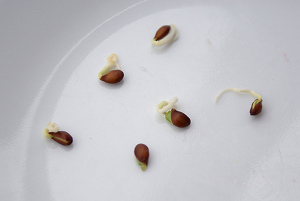 Pre-germinating Seeds Is a Great Way To Make Sure They Are Viable