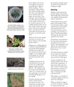Preview of a Page in How to Grow Juicy Tasty Tomatoes
