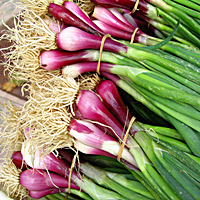 Red Baron Green Onions