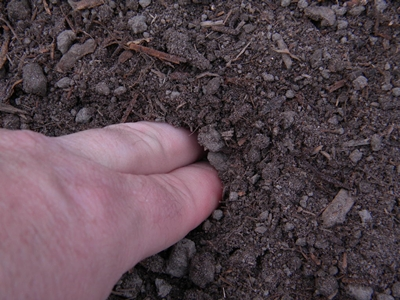 Push the Bush Bean Seeds Into The Soil About One and a Half Inches Deep