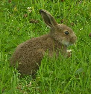 How To Deter Rabbits From The Vegetable Garden Ideas Home And Garden