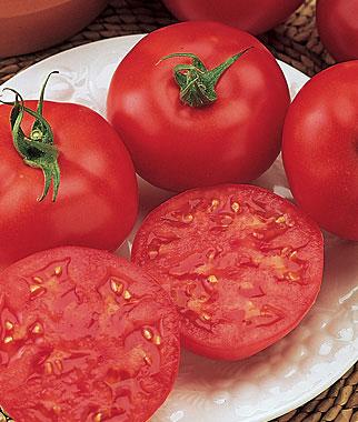 Red October Hybrid Tomato