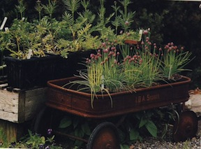 Red Wagon Planter