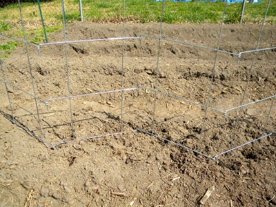 Set the Burpee Pea Fence Into Place