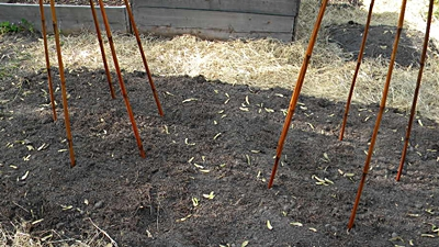 Push Bamboo Stakes In the Soil To Form a Circle