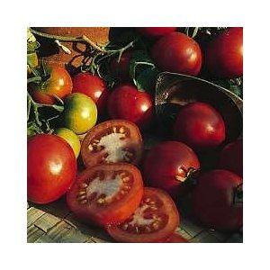 Sub Arctic Tomato