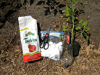 Supplies for Transplanting Tomatoes