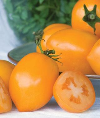 Tangerine Mama Tomato