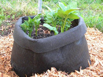 The Potato Grow Bag With Young Potato Plants