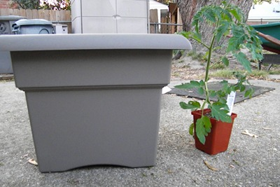 The Tomato Plant and the Container