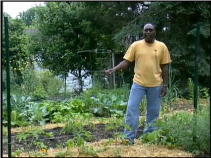 Veggie Gardening Tips Tomato Trellising System