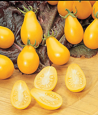 Yellow Pear Cherry Tomato