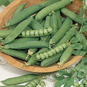 green_pea_seeds